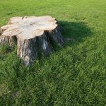 5 Reasons to Grind Your Tree Stumps