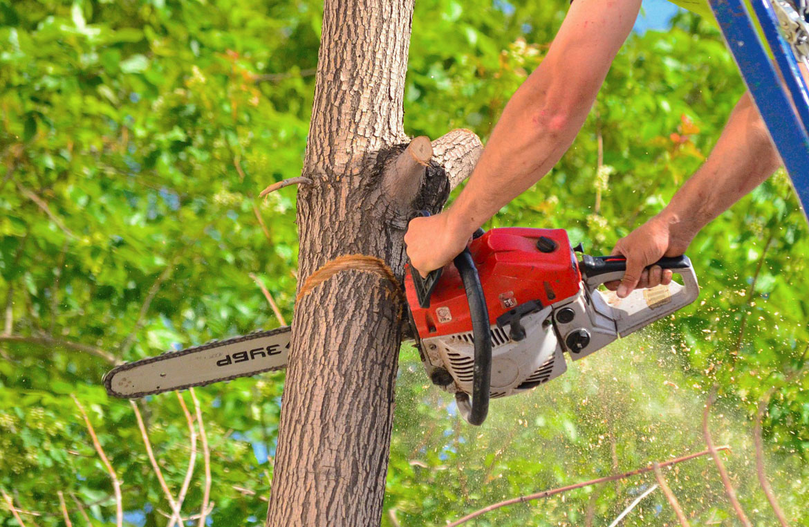 8 Things To Know About Tree Removal