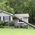 What Steps Should You Take When a Tree Falls On Your House?