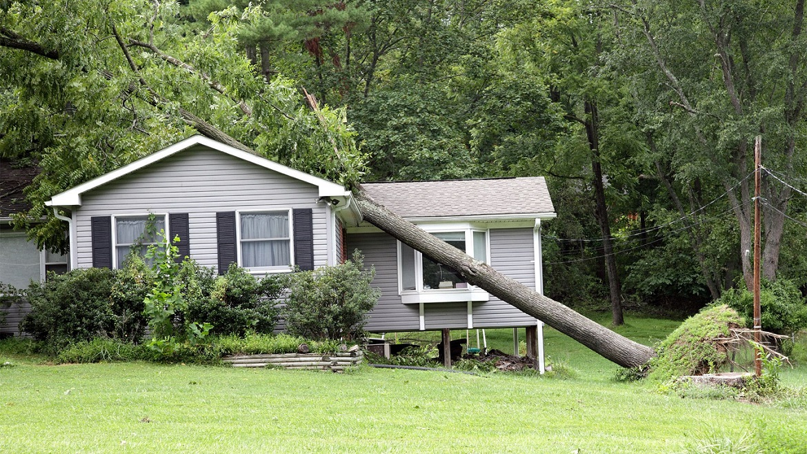 What Step Should You Take When A Tree Falls On Your House