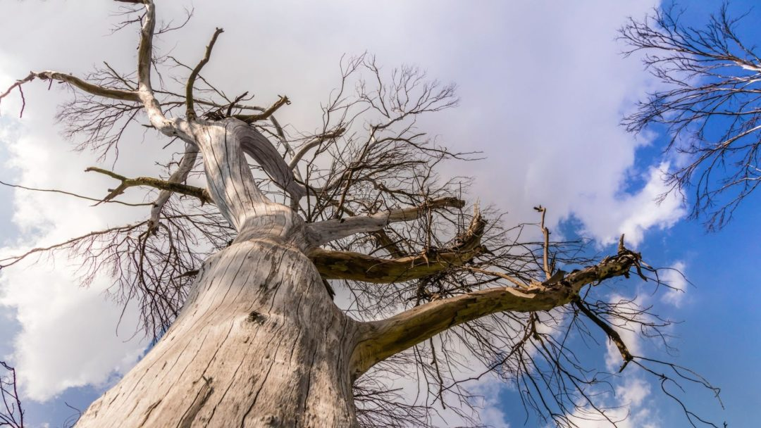 Whenisthebesttimetoremoveaproblematictree