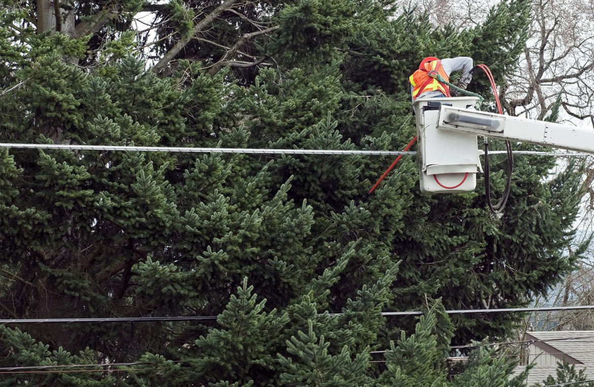 Best Way To Plant Trees Near Utility Lines