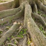 How to Properly Care for Tree Roots