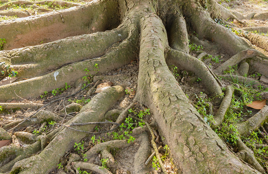 Caring For Tree Roots