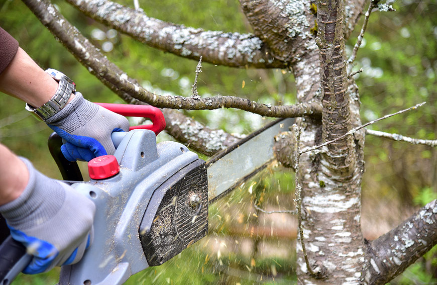 Chainsaw Tree Removal Diy Safety
