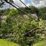 The Dangers of Growing Trees Near Power Lines