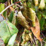 Diseased Tree Indicators