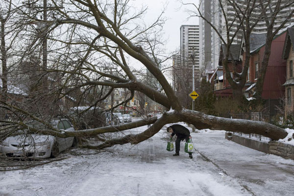 Toronto Emergency Tree Removal Services