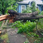 Emergency Tree Services Throughout the GTA