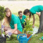 How To Get Your Land Ready For Spring Tree Planting