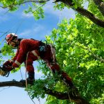 Why You Should Hire Professionals To Manage Your Trees