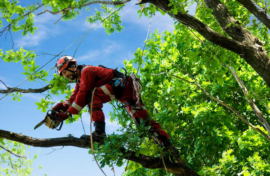 Hire Professionals Manage Trees Toronto