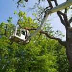 The Importance of Hiring an Arborist for Your Tree Care