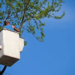 Steps When Hiring a Tree Service Company
