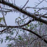 How to Help Trees That Are Covered in Ice