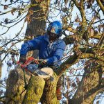 The Importance of Hiring Professionals to Remove Your Tree