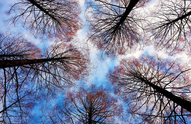 Opposite Branching