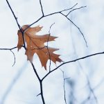 How to Prepare Newly Planted Trees for Winter
