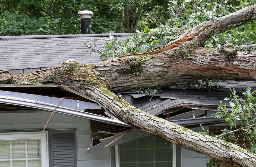 Prevent Trees Falling On House