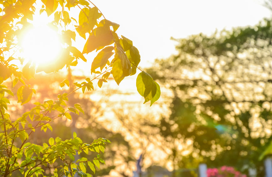Protect Trees Against Hot Summer Heat