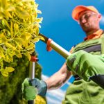 5 Top Reasons to Hire a Professional Tree Trimming Service