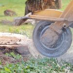 Why Stump Grinding Should Be Left to The Experts