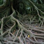 How to Spot and Address Girdling Roots