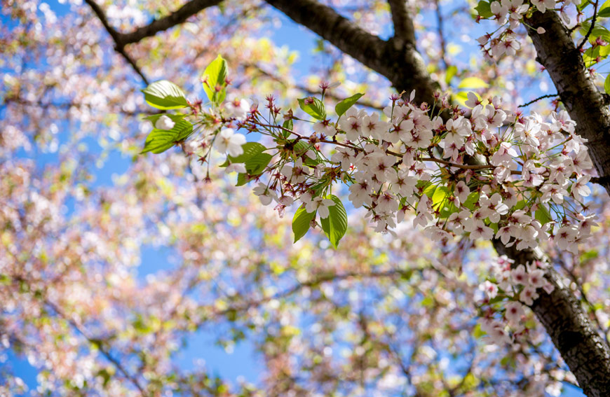 Spring Tree Care Checklist Toronto