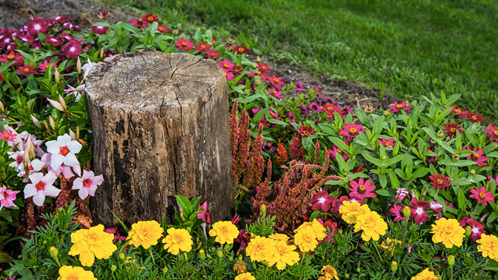 Stump Removal Featured
