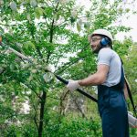 Things To Remember About Tree Care