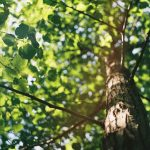 Things to Keep In Mind When Choosing a New Tree