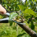 Top 7 Things to Keep in Mind When Pruning Your Tree