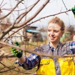 Top 3 Myths About Tree Care and Maintenance