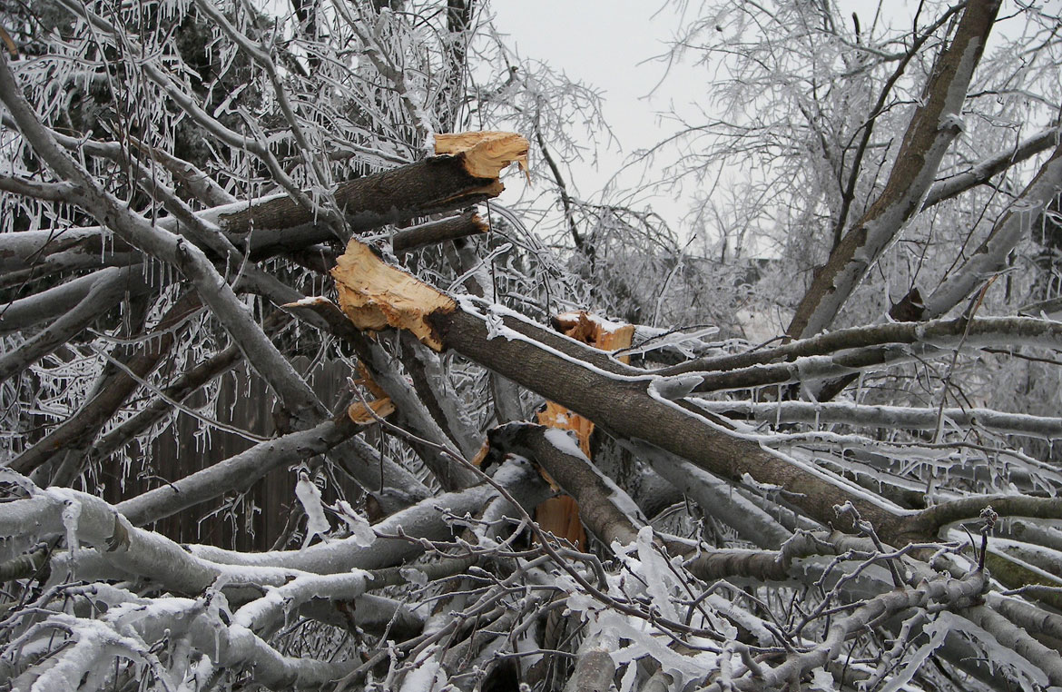Tree Care Before and After Major Storms