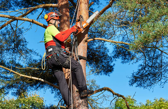 Tree Cutting and Removal Experts in Richmond Hill