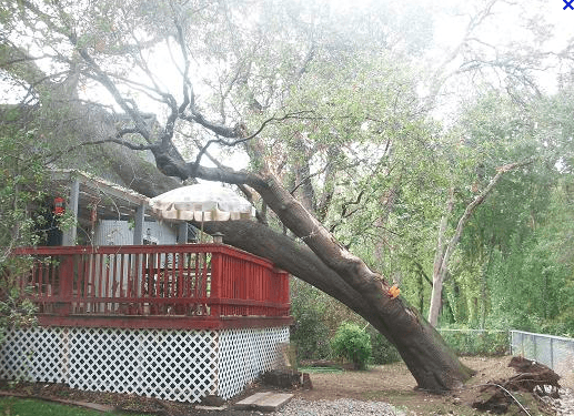 Fallen Tree on Home