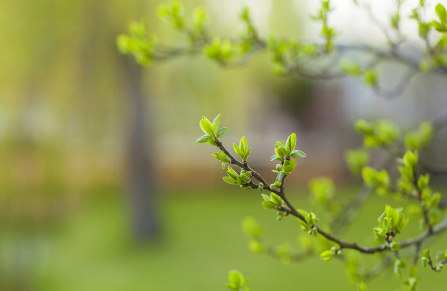 Tree Not Blooming In Spring