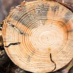 Tree Pests to Watch Out For