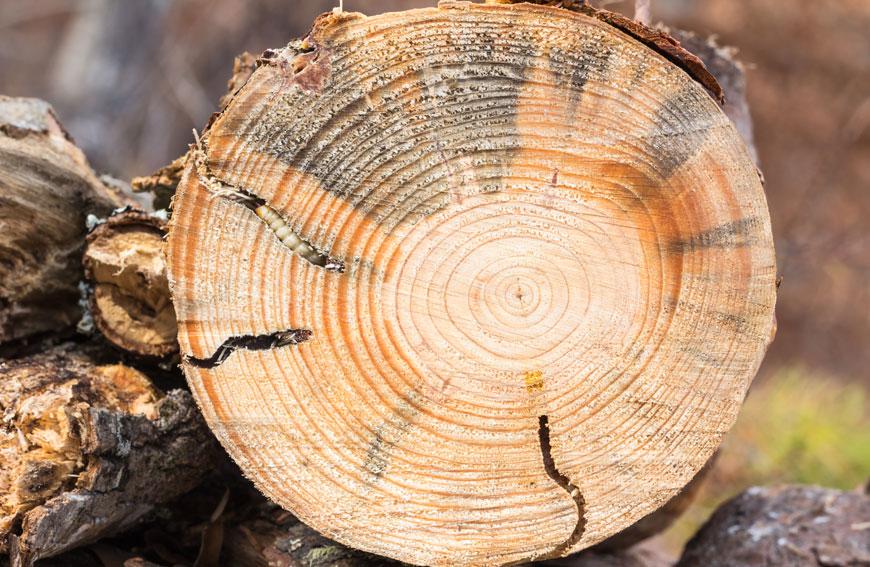Tree Pests Control Toronto