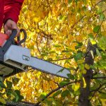 The Hazards That Come With Pruning & Tree Removal