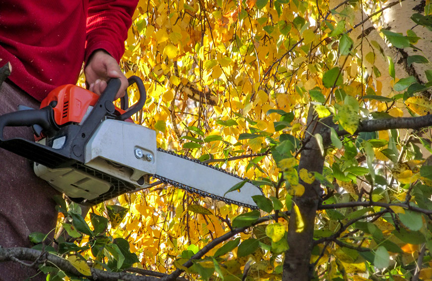 Tree Pruning And Removal Hazards