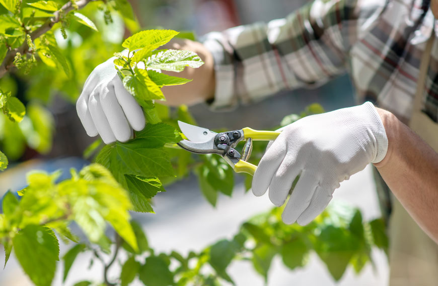 Tree Pruning Services Toronto