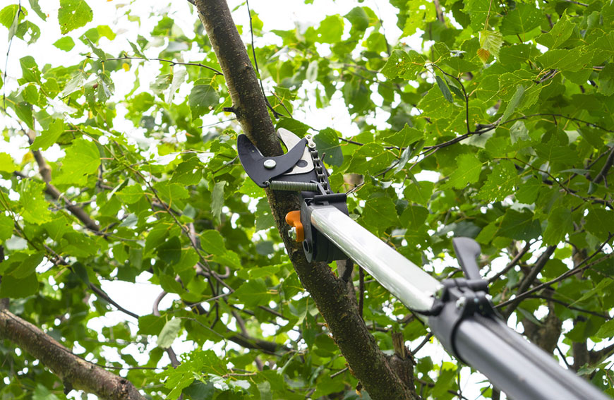 Tree Pruning Trimming Tips