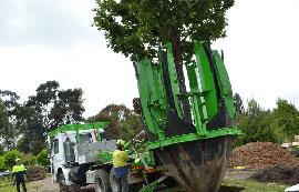 Tree Transplant
