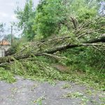 What to Do If Your Trees Are Damaged in A Storm