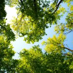When Is the Best Time to Have Your Trees Pruned?