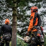 Why You Should Hire a Professional Arborist