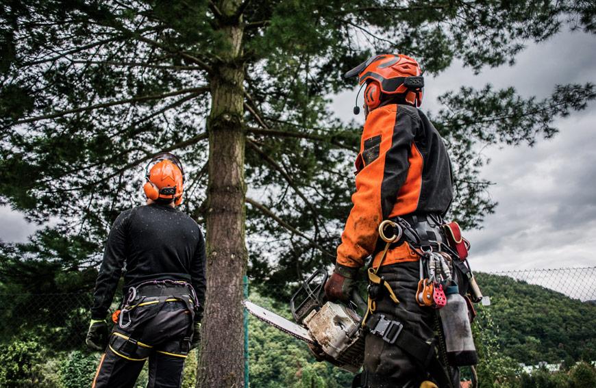 Why Hire Professional Arborist Toronto
