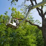 Why Tree Pruning Should Be Left to an Arborist
