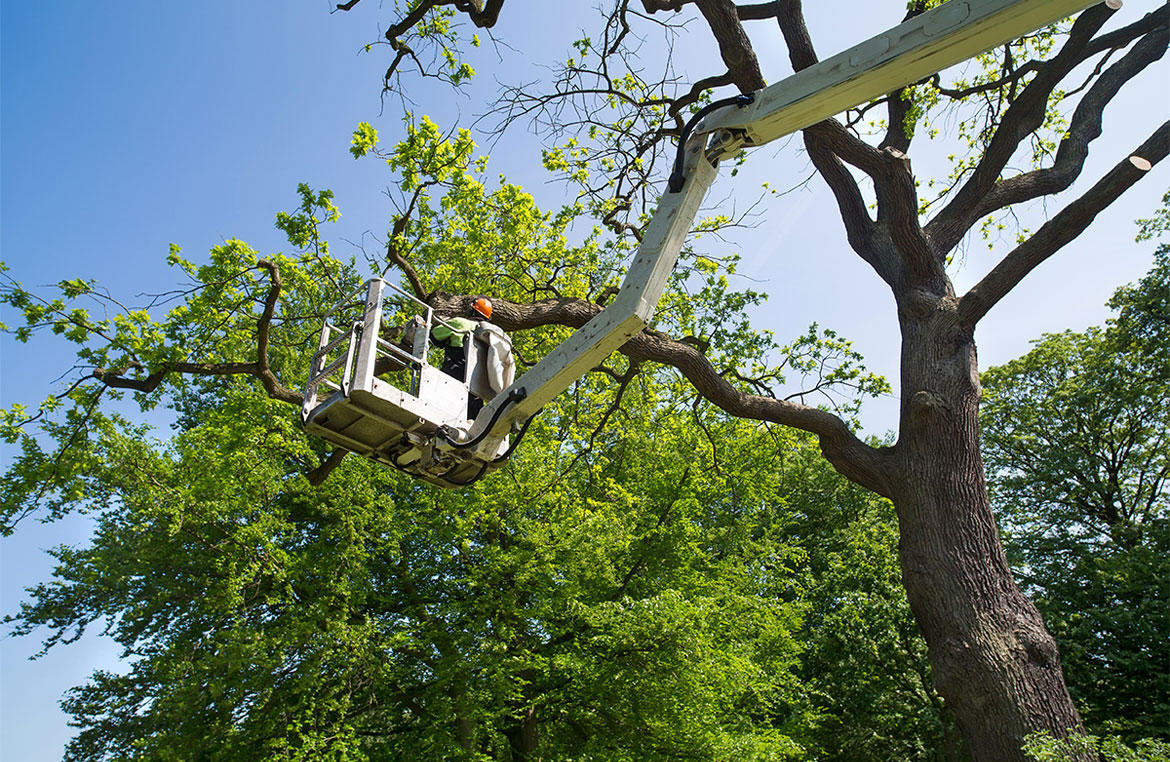 Why Important To Hire Arborist For Your Tree Pruning Project
